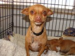 Chih and baby in El Paso Animal Resuce League's care